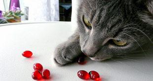 Как правильно применять витамины для кошки